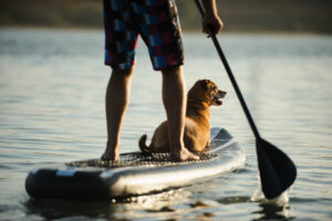 A dog and his owner paddleboard in Buffalo New York as Ellicott Development lists the top ten recreational activities in Buffalo